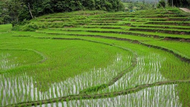 Irrigation in Rice Fields