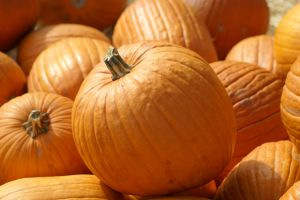 Need a reason to eat some delicious fall pumpkin? Here are six of them!