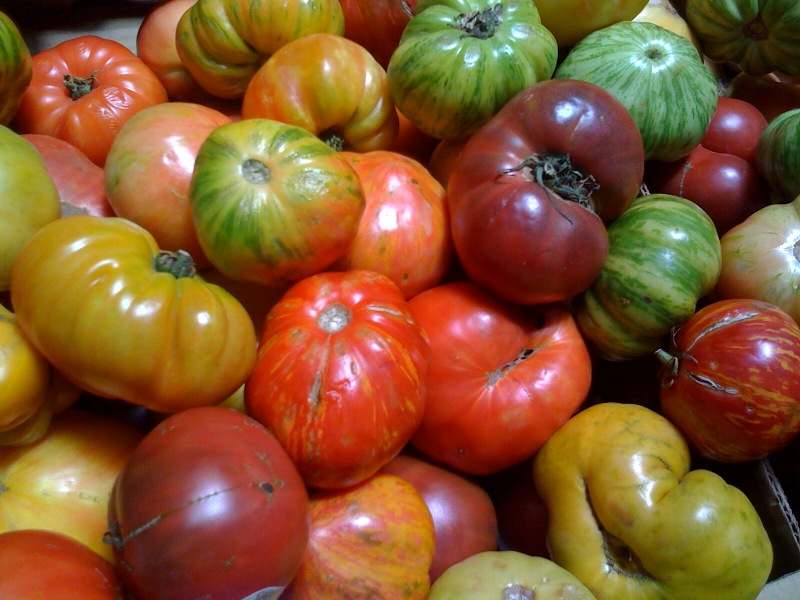 Heirloom tomatoes are in season now! They come in many shapes, sizes, and colors. Some are gorgeous, some are down-right ugly but, for the most part, they all taste pretty darn good.
