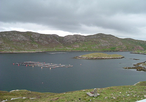 Salmon Farm in Gunnister Voe