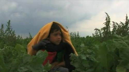 child farmworker