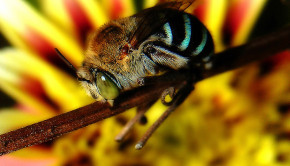 Colony Collapse Disorder: A World Without Bees