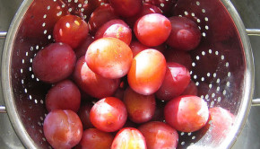 local plums uk