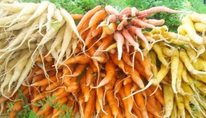 Fall Foods: Carrots