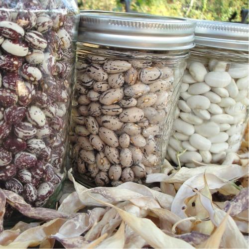 Storing beans in mason jars