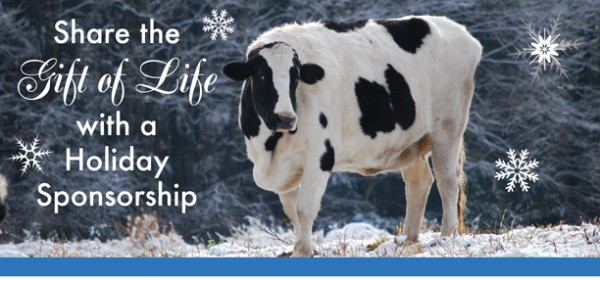Give the gift of compassion and sponsor a farm animal this holiday season!