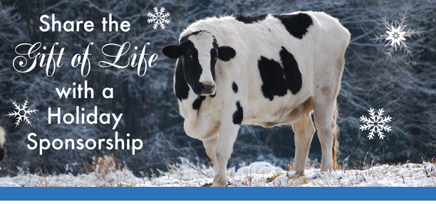 Sponsor a farm animal this holiday season!
