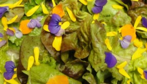 Heirloom lettuce with edible flowers salad