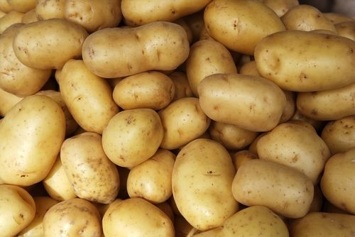 Basf cultivating gm potato in europe eat drink better - What to do with potatoes ...