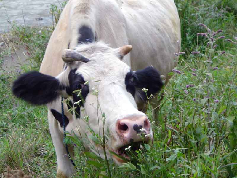 how to avoid mad cow disease