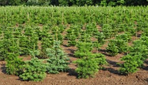 Tree Farm Nursery