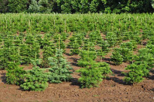 Tree Farm Nursery