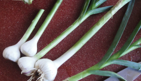 Green garlic season is short but sweet. Here's how to buy or grow it, plus some tips on how to prepare this spring gem!
