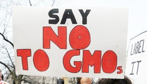 Documentary 'Genetic Roulette' Urges NO on GMOs