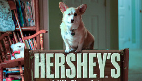 hershey chocolate