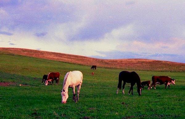 horsescows