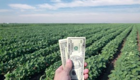 Soy Plants and Money