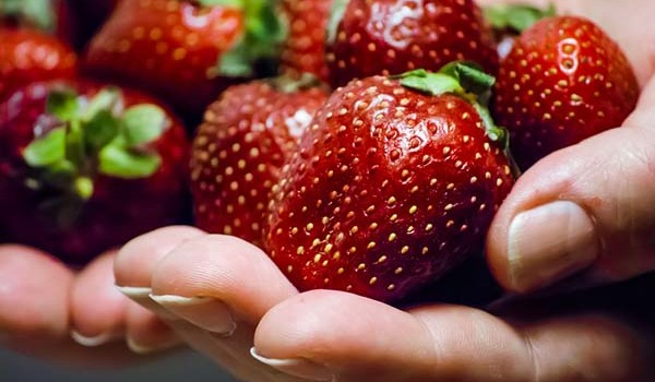 strawberries for DIY fruit roll up