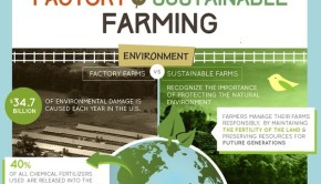 Factory Farming versus Sustainable Farming