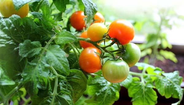 Small Food Companies Gatheround