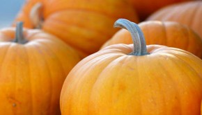 A look at the shocking amount of Halloween pumpkin waste.