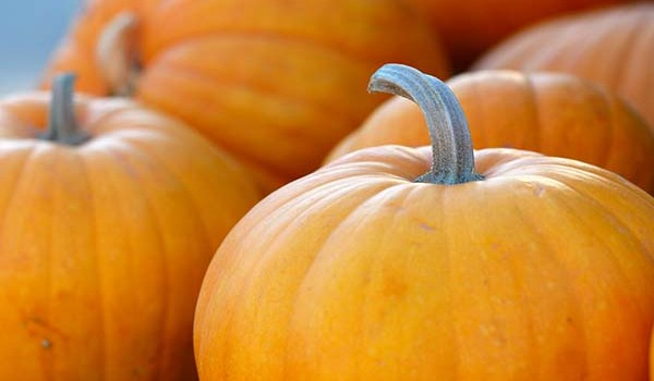 pumpkins for pumpkin stew