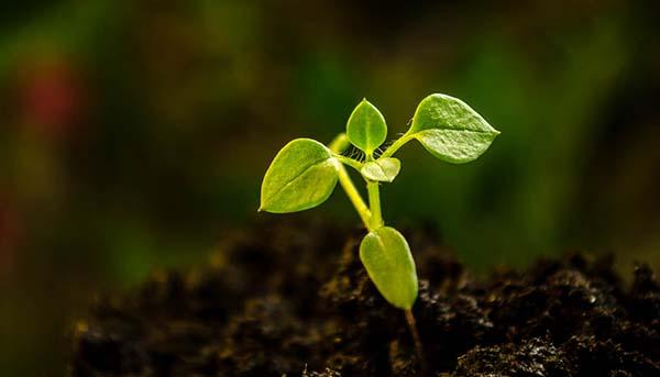 Seedling Biodiversity