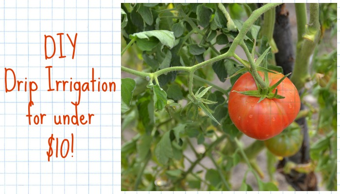 Diy Drip Irrigation System Costs Less Than $10!