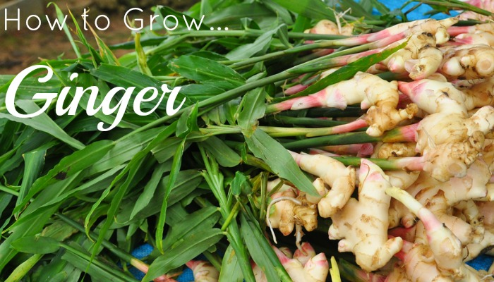 Growing food definition pdf