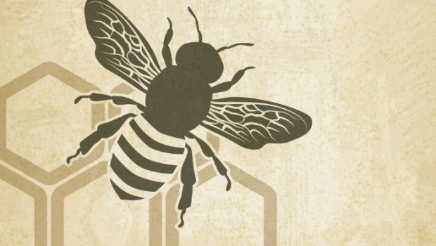 Bee Expert on Colony Collapse Disorder