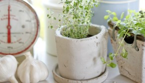 How to Grow Herbs in a Kitchen Garden