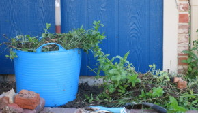 How to Get Rid of Weeds