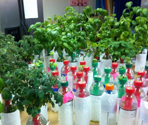Water Bottle Garden Is Hydroponics For Beginners