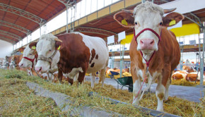 Antibiotic Use in Livestock