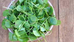 Watercress - Healthiest Vegetables