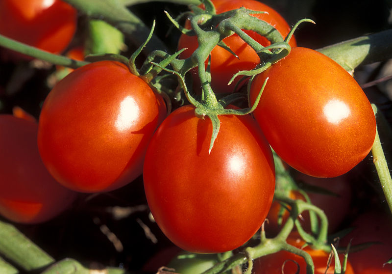 Garden Recipes: Slow Roasted Tomato Sauce - Eat Drink Better