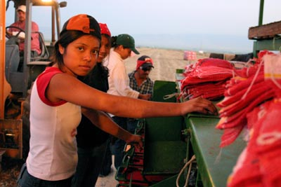 young-female-onion-worker
