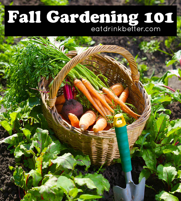 Fall Garden Guides for Your Vegetable Garden