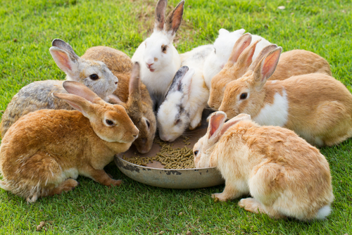 Rabbit Meat at Whole Foods: Why is it worse than other meat?