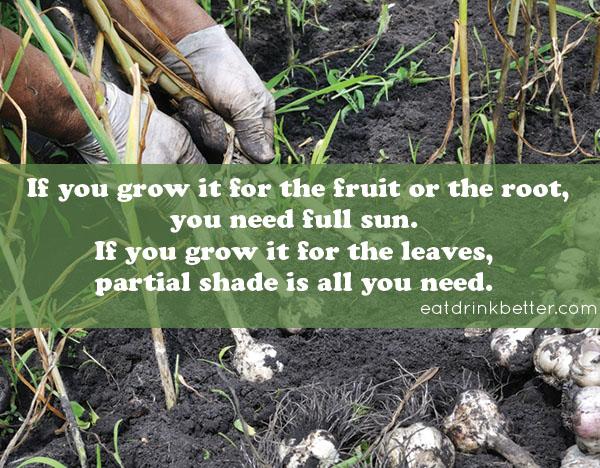 Fall Garden Guides for Your Vegetable Garden
