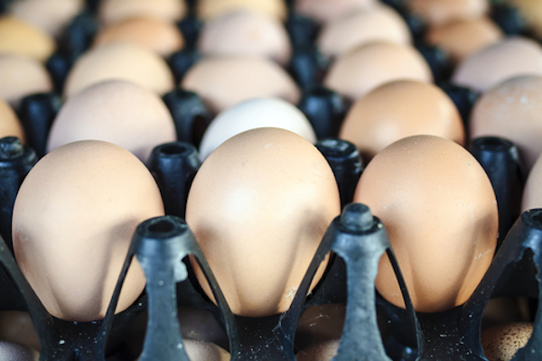 Antibiotics in Chicken? Perdue Thinks Not.