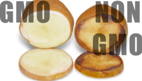USDA recently approved a new GMO potato. Will we see GMO potatoes on store shelves? And are they safe?