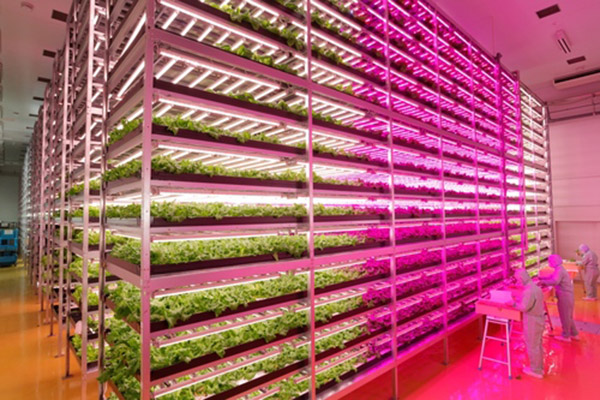 Hydroponic farming that uses 99% less water than conventional farming