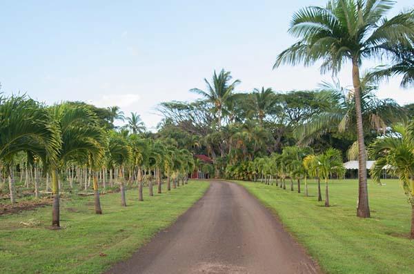 Maui GMO Moratorium Passes in a Close Race