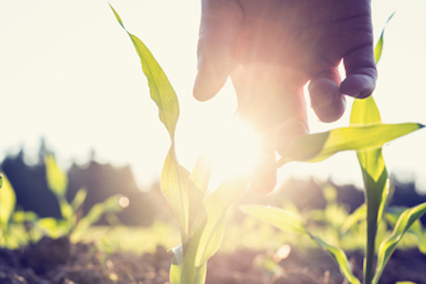 Organic Farm Yields Are Higher Than You May Think