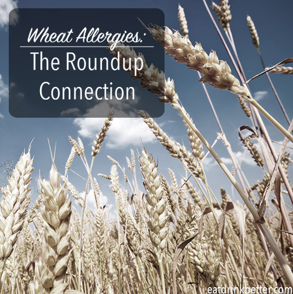 Could wheat allergies be a pesticide problem?