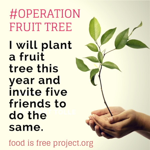 Food is Free When You Plant Your Own Fruit Trees #OperationFruitTree