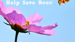 Tell President Obama: It's time to ban toxic bee-killing pesticides!