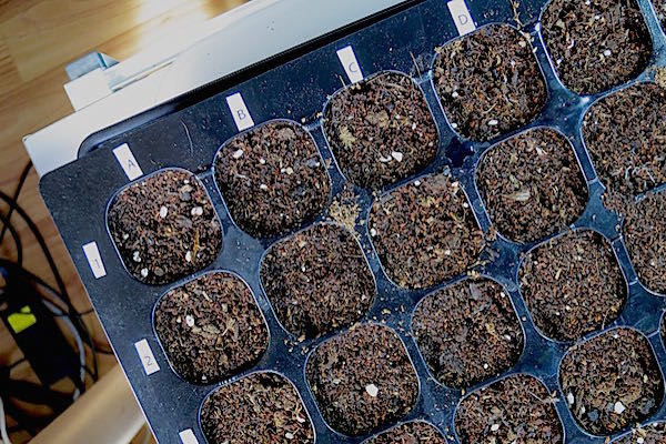 Growing Food: Starting Seeds Indoors Part 3
