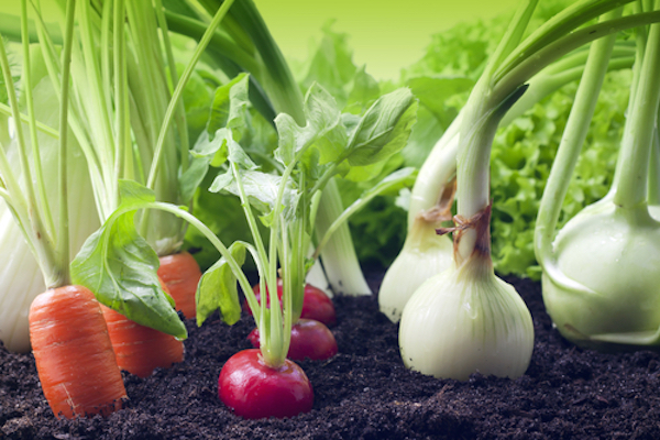 Growing Vegetables: The Only Guide You Need! [Infographic]